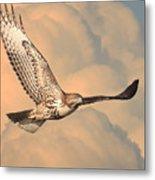Soaring Hawk Metal Print by Wingsdomain Art and Photography