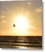 Soaring Seagull Sunset Over Imperial Beach Metal Print