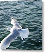 Soaring Waters Metal Print