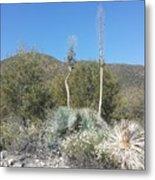 Socal Yucca Metal Print
