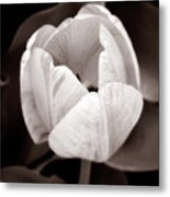 Soft And Sepia Tulip Metal Print