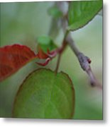 Soft Branch Metal Print