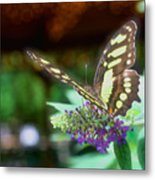 Soft Butterfly Metal Print
