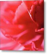 Soft Carnation Petals Metal Print