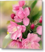 Soft Apple Blossom Metal Print