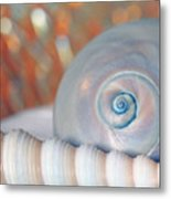 Soft Colored Shells Metal Print