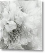 Soft Dahlia White Metal Print