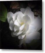 Soft Focus Gardenia Metal Print