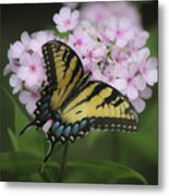 Soft Focus Tiger Swallowtail Metal Print
