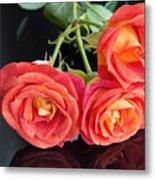 Soft Full Blown Red-orange Roses On Black Background. Metal Print