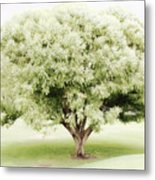 Soft Green Tree Metal Print