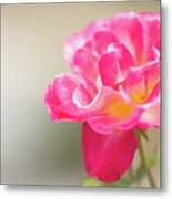 Soft As A Whisper Of A Hot Pink Rose Metal Print