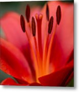 Soft Intimate View Metal Print