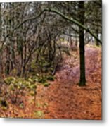 Soft Light In The Woods Metal Print