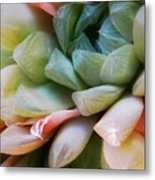 Soft Natural Succulents Metal Print