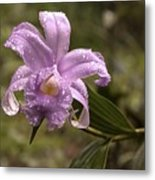 Soft Pink One-day Orchid With Droplets Of Dew Metal Print