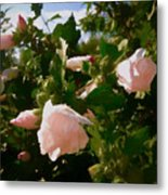 Soft Pink Rose Of Sharon Metal Print