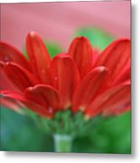 Soft Red Metal Print
