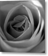 Soft Rose In Black And White Metal Print
