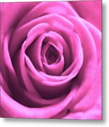 Soft Touch Pink Rose Metal Print