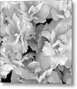 Soft Whites Metal Print