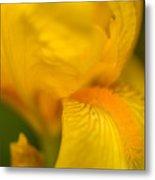 Softly Yellow Metal Print