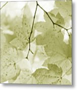 Softness Of Olive Green Maple Leaves Metal Print