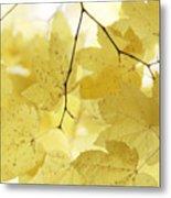 Softness Of Yellow Leaves Metal Print
