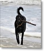 Soggy Stick Metal Print