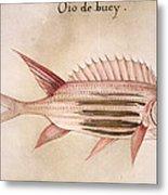 Soldier-fish, 1585 Metal Print