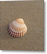 Solitary Cockle Shell Metal Print