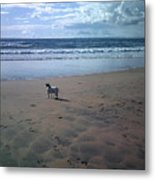 Solitary Doglooking To America Metal Print