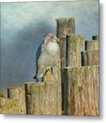 Solitary Gull Metal Print
