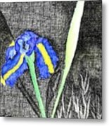 Solitary Iris Metal Print