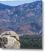 Solitary Pine On Promontory Metal Print