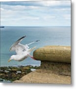 Solitary Seagull Take-off Metal Print