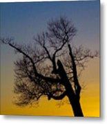 Solitary Tree At Sunset Metal Print