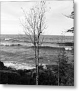 Solo Young Tree Metal Print