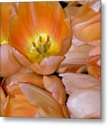 Somewhat Peachy Metal Print