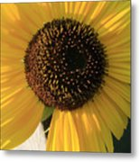 Son Of A Sun Metal Print