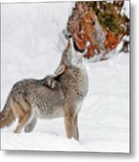 Song Of The Wild Metal Print