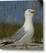 Songs Of The Gull Metal Print