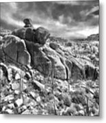 Sonora Desert Metal Print