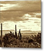 Sonoran Desert Mountains And Cactus Near Phoenix Metal Print