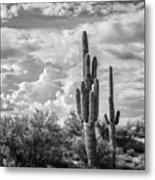 Sonoran Desert View Metal Print
