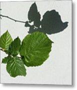 Sophisticated Shadows - Glossy Hazelnut Leaves On White Stucco - Horizontal View Left Down Metal Print