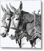 Sorrel Mule Team Metal Print