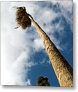 Sorrento Date Palms Metal Print
