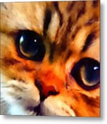 Soulfull Eyes Kitten Portrait Metal Print