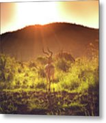 South Africa At Its Finest  Metal Print